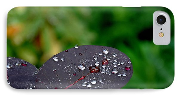 Dew Drops On Smoke Tree Leaves IPhone Case by Tanya  Searcy