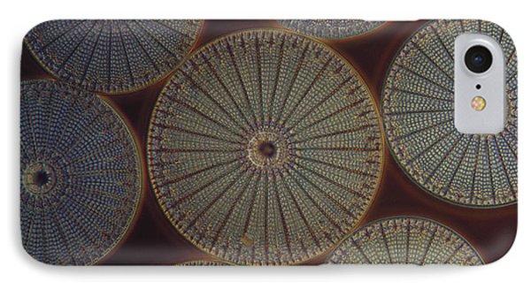 Diatom - Arachnoidiscus IPhone Case by M. I. Walker