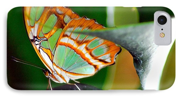 IPhone Case featuring the photograph Dido Longwing Butterfly by Peggy Franz