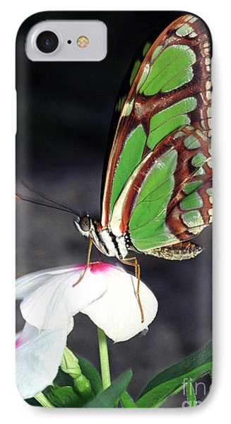 Dido Longwing Butterfly Phone Case by Terry Elniski
