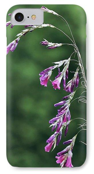 Dierama Pulcherrimum In Flower Phone Case by Colin Varndell