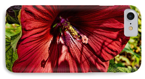 Dinner Plate Hibiscus Phone Case by Christopher Holmes