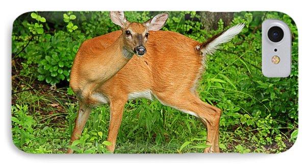 Doe A Deer Phone Case by Karol Livote
