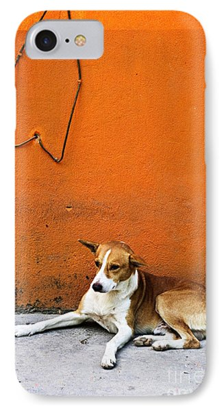 Dog Near Colorful Wall In Mexican Village IPhone Case