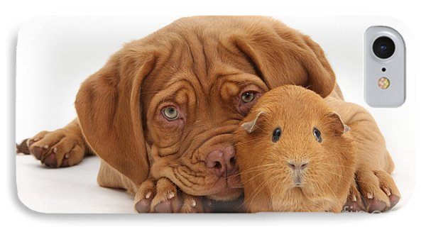 Dogue De Bordeaux Puppy With Red Guinea Phone Case by Mark Taylor