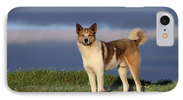 Domestic Dog Canis Familiaris, Taymyr Phone Case by Konrad Wothe