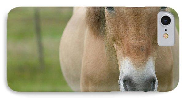 Domestic Horse Equus Caballus Portrait Phone Case by Cyril Ruoso