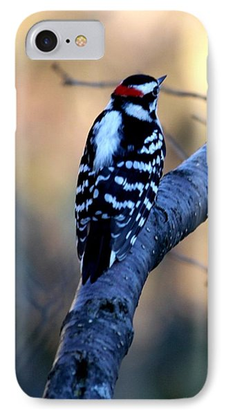 IPhone Case featuring the photograph Downy Woodpecker by Elizabeth Winter