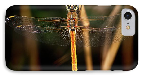 IPhone Case featuring the photograph Dragon Fly 1 by Pedro Cardona