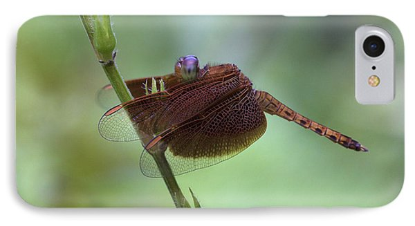 Dragonfly On A Leaf Phone Case by Zoe Ferrie