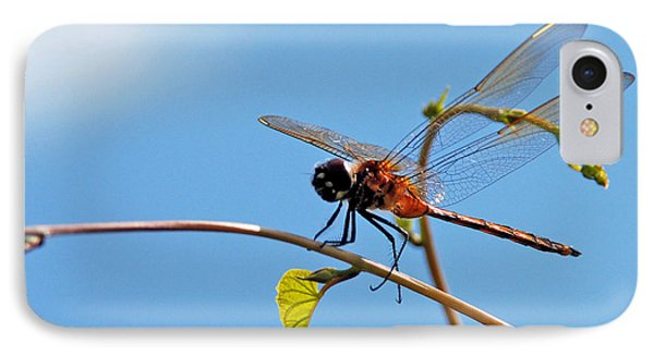 Dragonfly On A Vine IPhone Case by Kay Lovingood