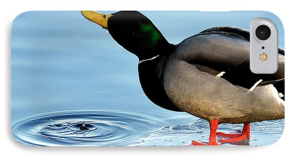 Drinking Duck IPhone Case by Joanne Brown