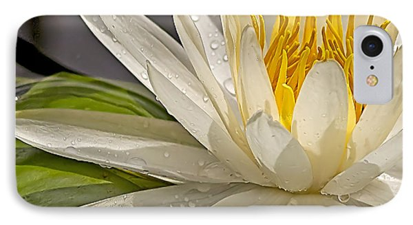 IPhone Case featuring the photograph Droplets On The Lily by Anne Rodkin
