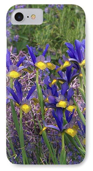 Dutch Iris (iris Xiphium) IPhone Case