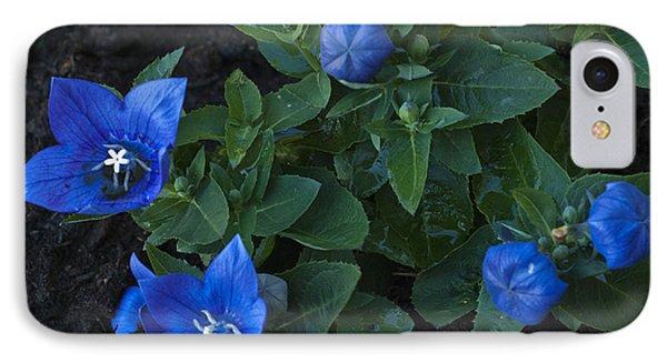Dwarf Balloon Flower Platycodon Astra Blue 2 Phone Case by Steve Purnell