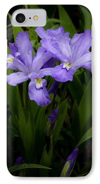 Dwarf Crested Iris Phone Case by Rob Travis
