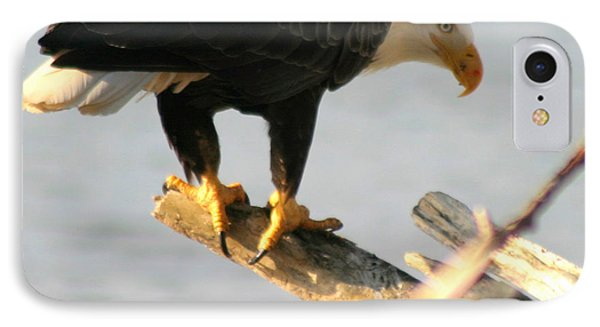 IPhone Case featuring the photograph Eagle On His Perch by Kym Backland