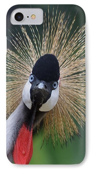 East African Crowned Crane IPhone Case by Maggy Marsh