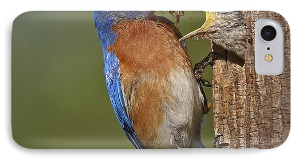 Eastern Bluebird Feeding Chick IPhone Case by Susan Candelario