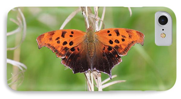 IPhone Case featuring the photograph Eastern Comma Butterfly by Penny Meyers