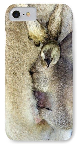 Eastern Grey Kangaroo Joey Phone Case by Tony Camacho