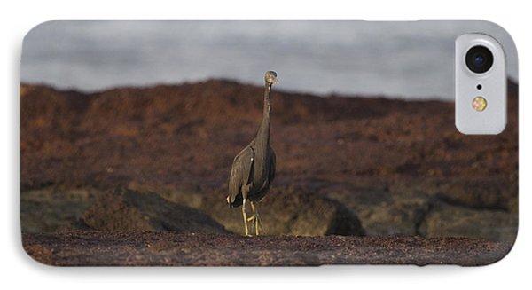 Eastern Reef Egret-dark Morph Phone Case by Douglas Barnard