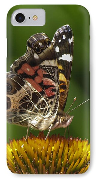 Echinacea Butterfly Meal Phone Case by Darleen Stry