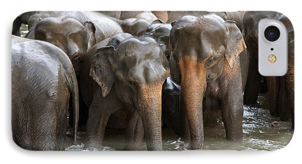 Elephant Herd In River IPhone Case by Jane Rix
