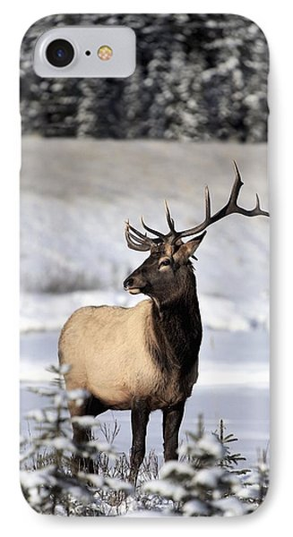 Elk Cervus Canadensis Bull Elk During IPhone Case by Richard Wear