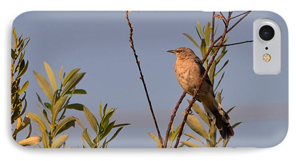 IPhone Case featuring the photograph Mocking Bird2 by Rima Biswas