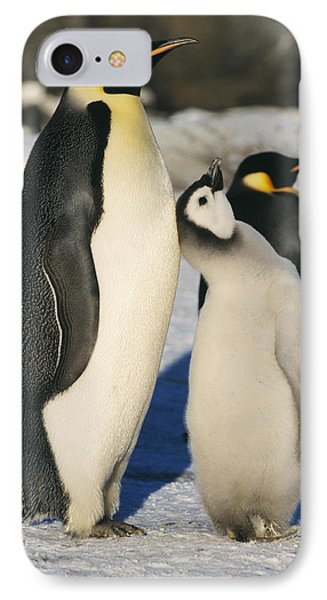 Emperor Penguins With Chick IPhone Case by Doug Allan