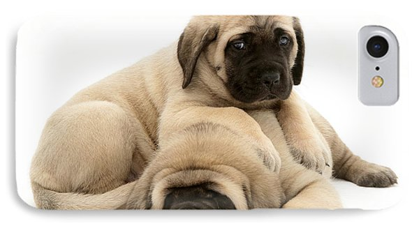English Mastiff Puppies IPhone Case by Jane Burton