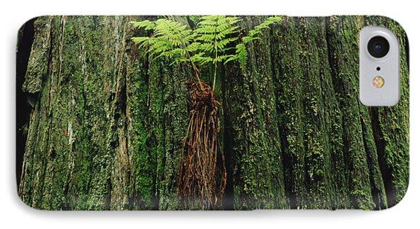 Epiphytic Fern Growing On Redwood Phone Case by Gerry Ellis