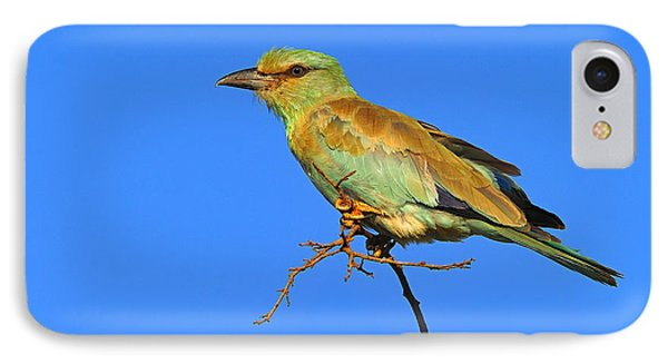 Eurasian Roller Phone Case by Tony Beck