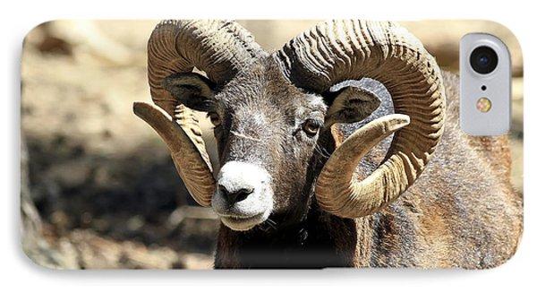 European Big Horn - Mouflon Ram IPhone Case by Teresa Zieba