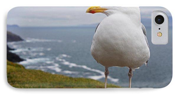 European Herring Gull Larus Argentatus Phone Case by Trish Punch