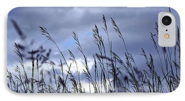Evening Grass Phone Case by Elena Elisseeva