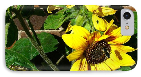 IPhone Case featuring the photograph Everyone Loves Sunflowers by Jim Sauchyn