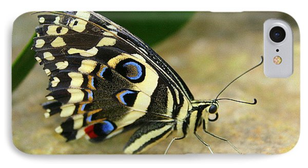 IPhone Case featuring the photograph Eye To Eye With A Butterfly by Laurel Talabere