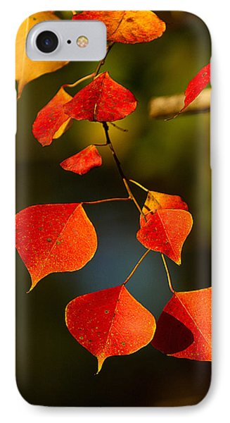 IPhone Case featuring the photograph Fall Color 2 by Dan Wells