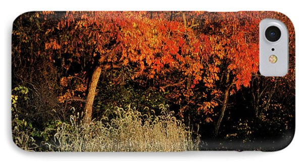 IPhone Case featuring the photograph Fall Colors 2 by Vilas Malankar