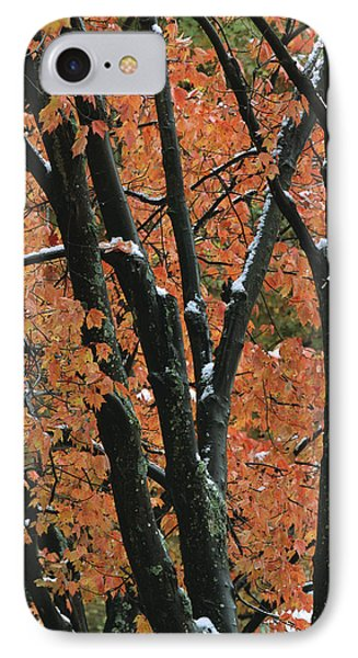 Fall Foliage Of Maple Trees After An Phone Case by Tim Laman