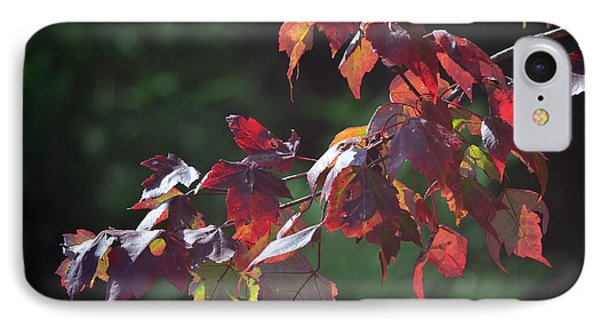 Fall Red Phone Case by Sandi OReilly