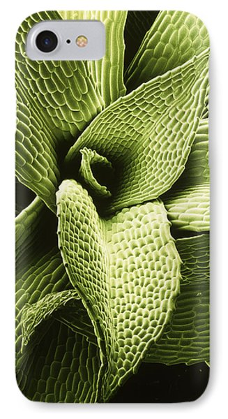 False Colour Sem Of Moss Leaves; Green. IPhone Case by Dr Jeremy Burgess