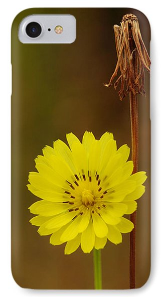 IPhone Case featuring the photograph False Dandelion Flower With Wilted Fruit by Daniel Reed