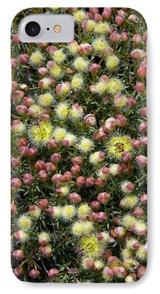 Featherflower (verticordia Brachypoda) Phone Case by Bob Gibbons