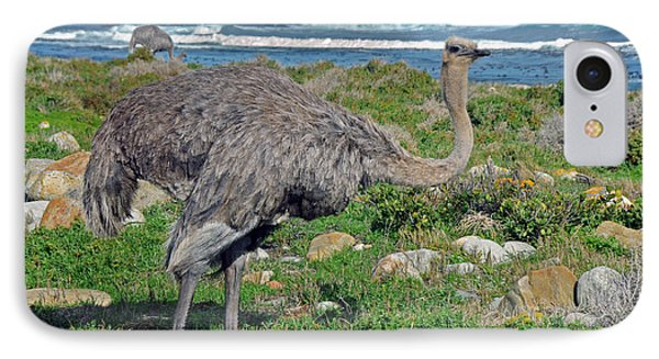 Feathers By The Sea Wild Female E African Ostrich Southern Race Cape Of Good Hope South Africa Phone Case by Jonathan Whichard