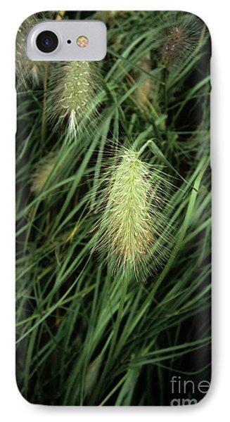 Feathertop Grass (pennisetum Villosum) Phone Case by Adrian Thomas