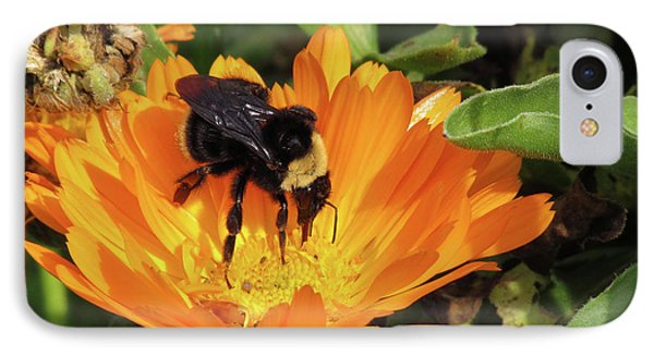 Feeding In Calendula IPhone Case