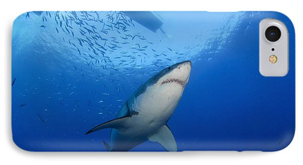 Female Great White, Guadalupe Island Phone Case by Todd Winner